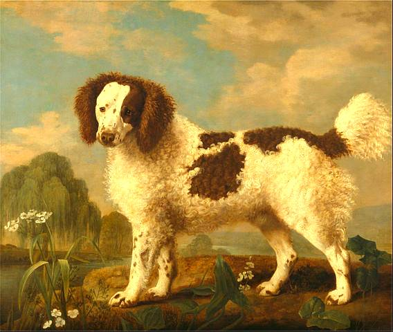 Brown and White Norfolk - George Stubbs