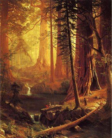 California Redwoods - Albert Bierstadt
