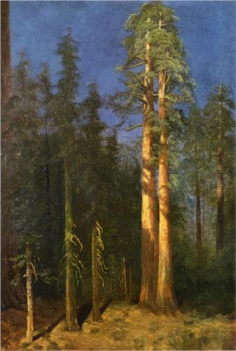 California Redwoods II - Albert Bierstadt