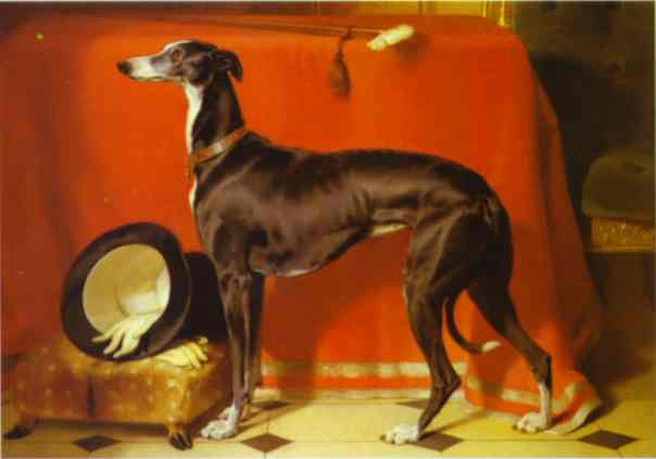 Eos, Favorite Greyhound of Prince Albert - Edwin Henry Landseer
