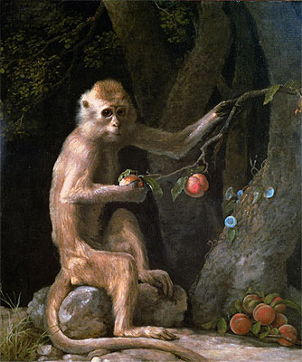 Portrait of a Monkey - George Stubbs