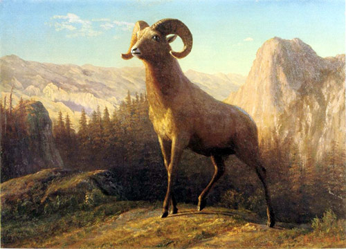 Rocky Mountain Sheep Ovis Montana - Albert Bierstadt