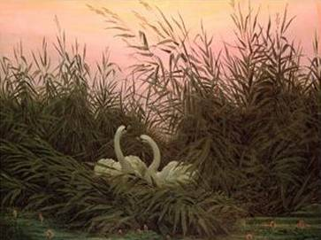 Swans in the Reeds - Caspar David Friedrich