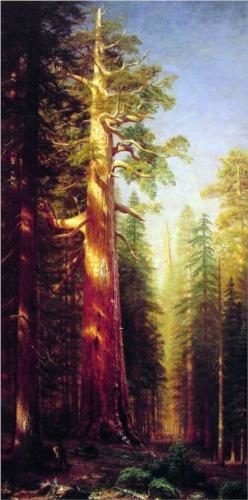 The Great Trees in Mariposa Grove, California - Albert Bierstadt