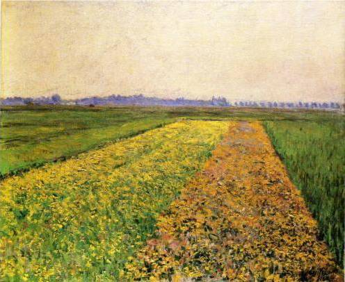 Yellow Fields at Gennevilliers - Gustave Caillebotte